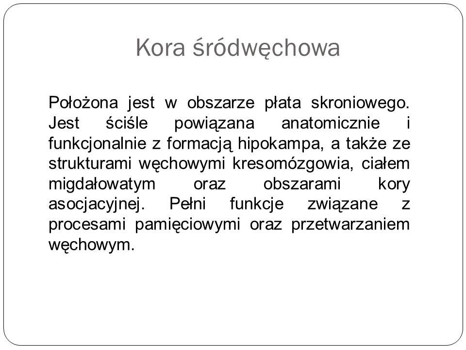 Kora śródwęchowa