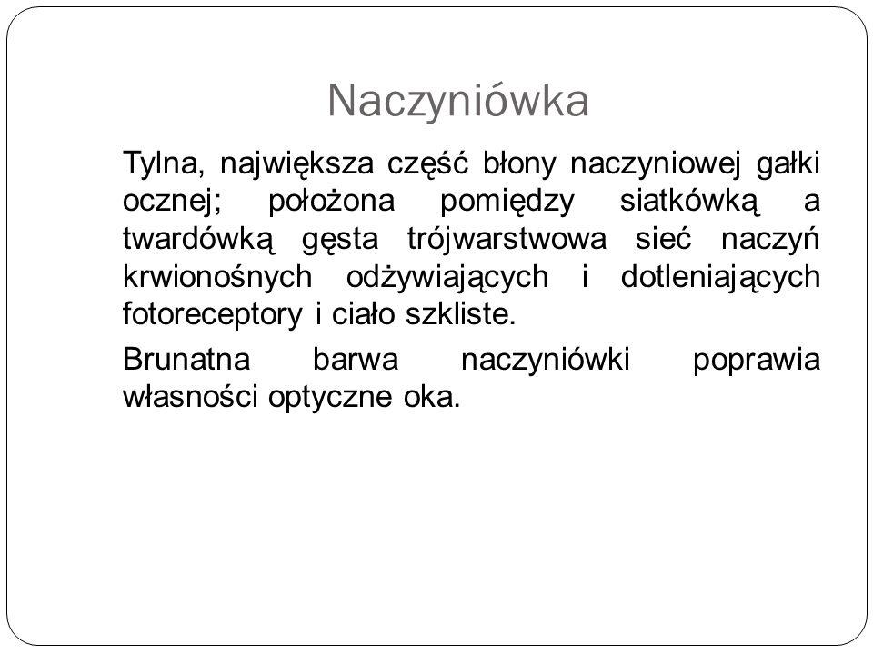 Naczyniówka