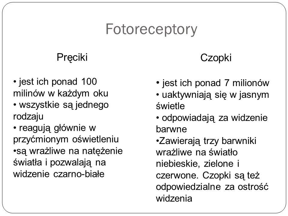 Fotoreceptory Pręciki Czopki jest ich ponad 7 milionów