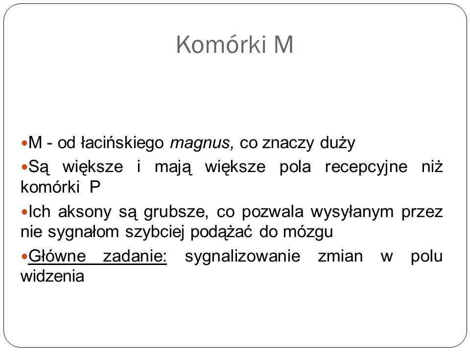 Komórki M M - od łacińskiego magnus, co znaczy duży