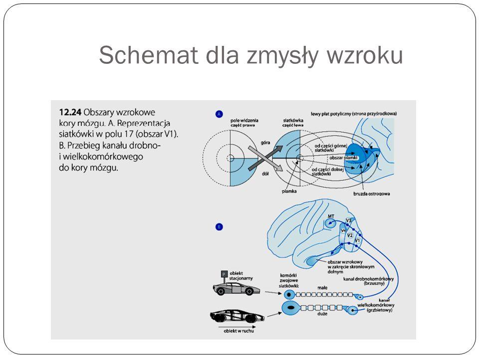 Schemat dla zmysły wzroku
