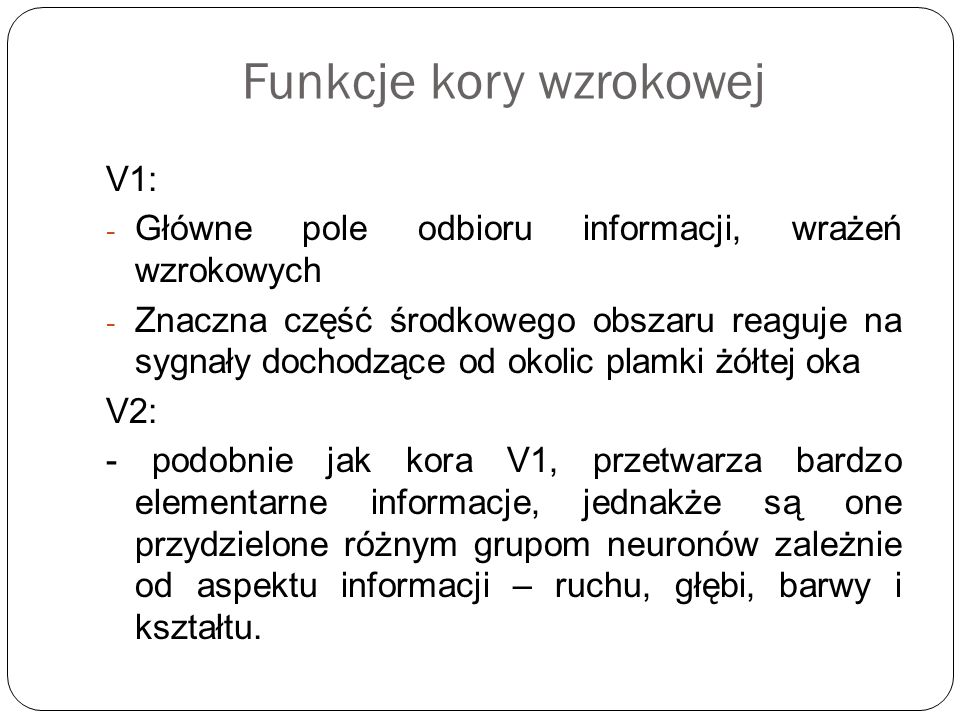 Funkcje kory wzrokowej