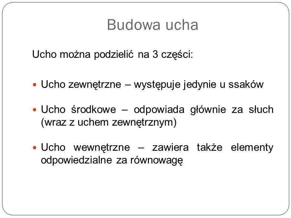 Budowa ucha Ucho można podzielić na 3 części:
