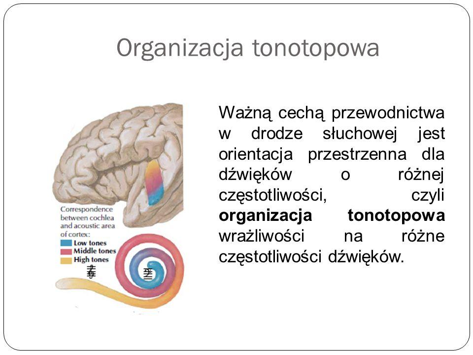 Organizacja tonotopowa