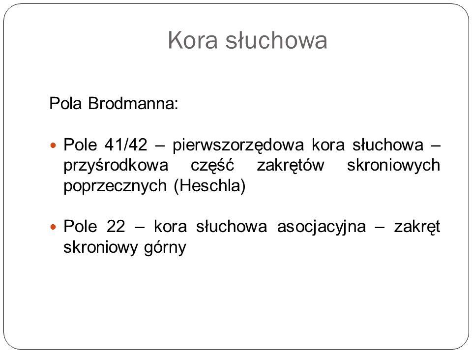 Kora słuchowa Pola Brodmanna: