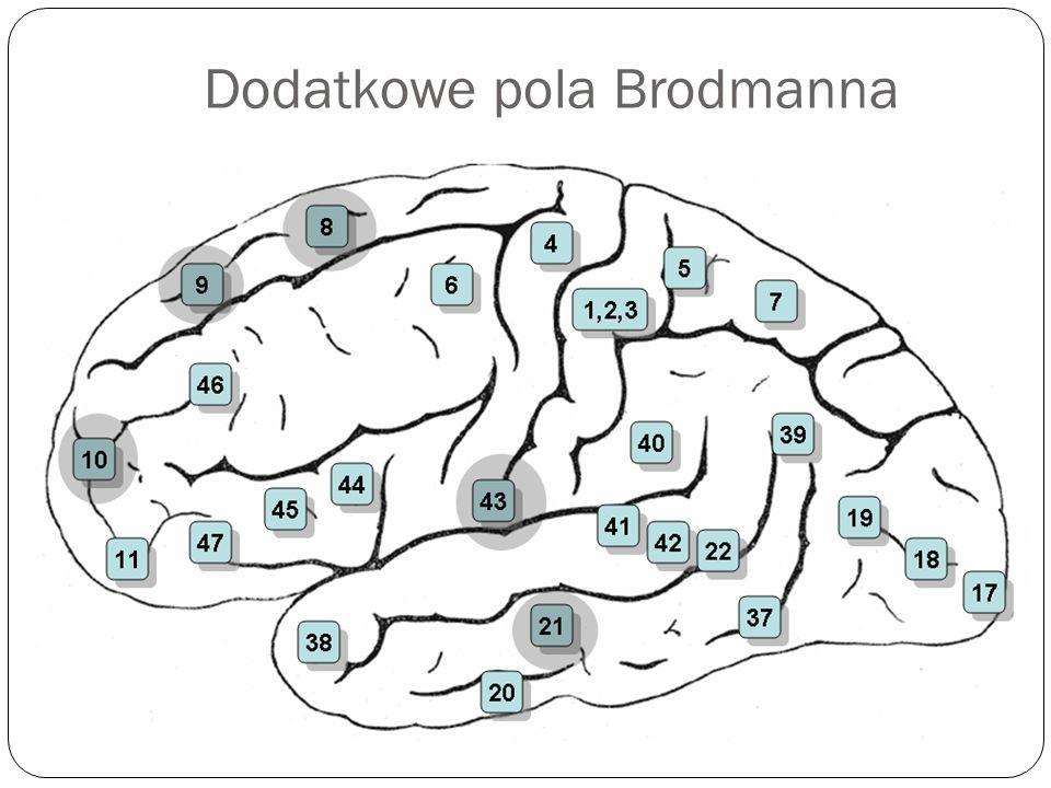 Dodatkowe pola Brodmanna