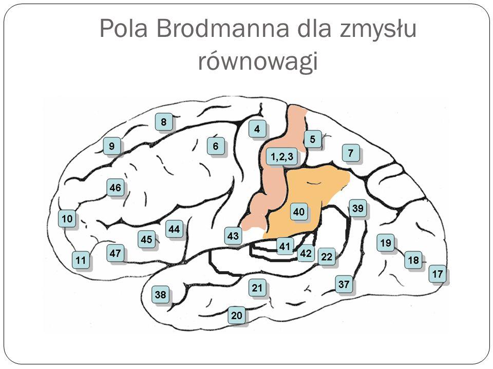 Pola Brodmanna dla zmysłu równowagi