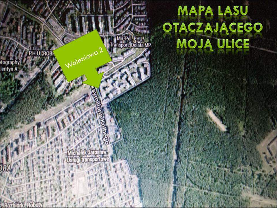 Mapa lasu otaczającego moją ulice