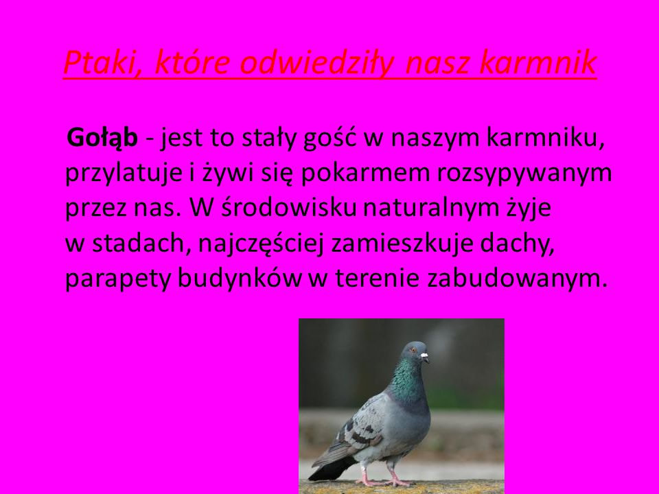 Ptaki, które odwiedziły nasz karmnik
