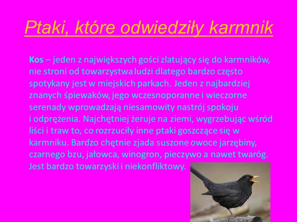 Ptaki, które odwiedziły karmnik