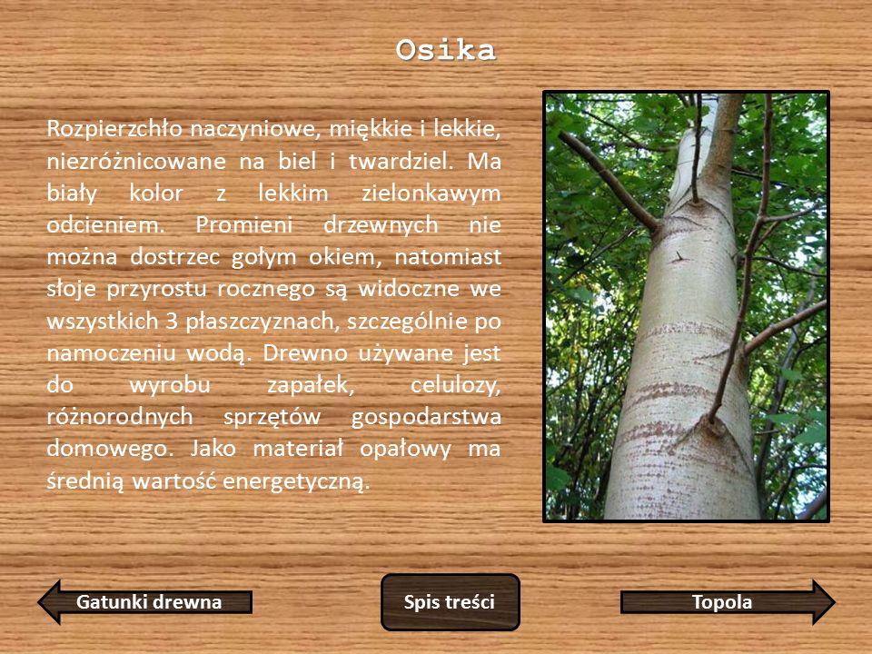 Osika