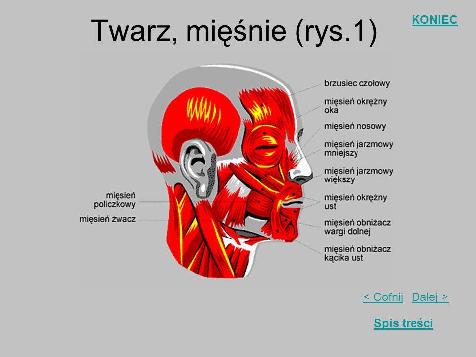 Twarz, mięśnie (rys.1)