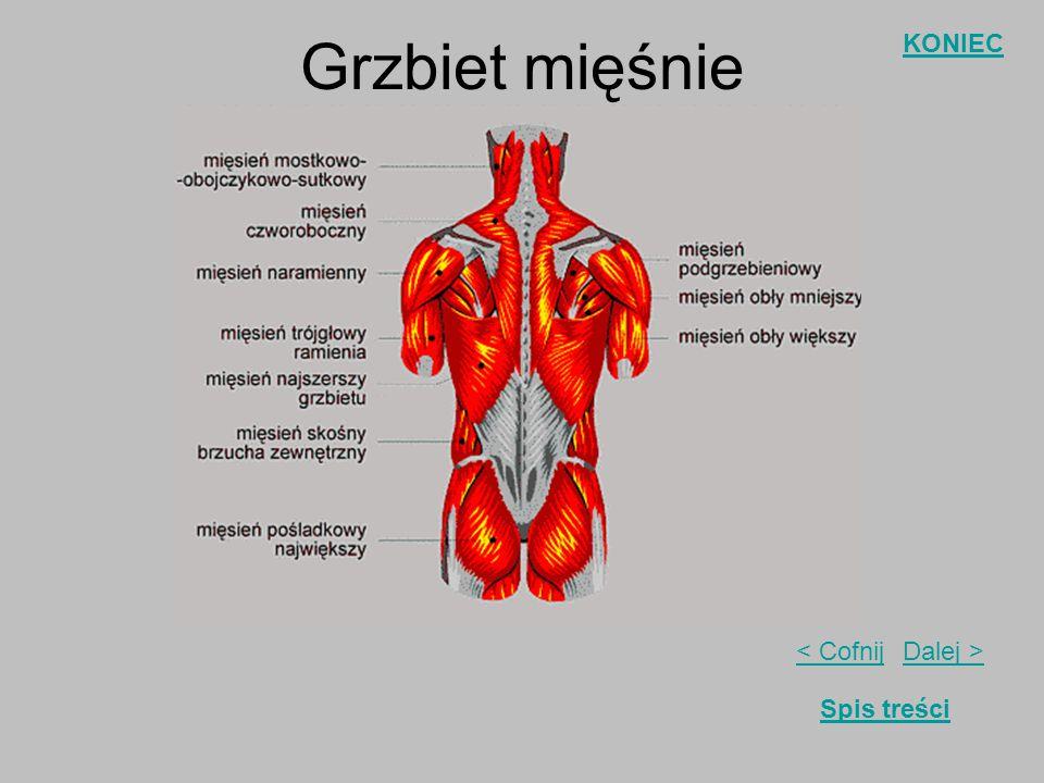 Grzbiet mięśnie