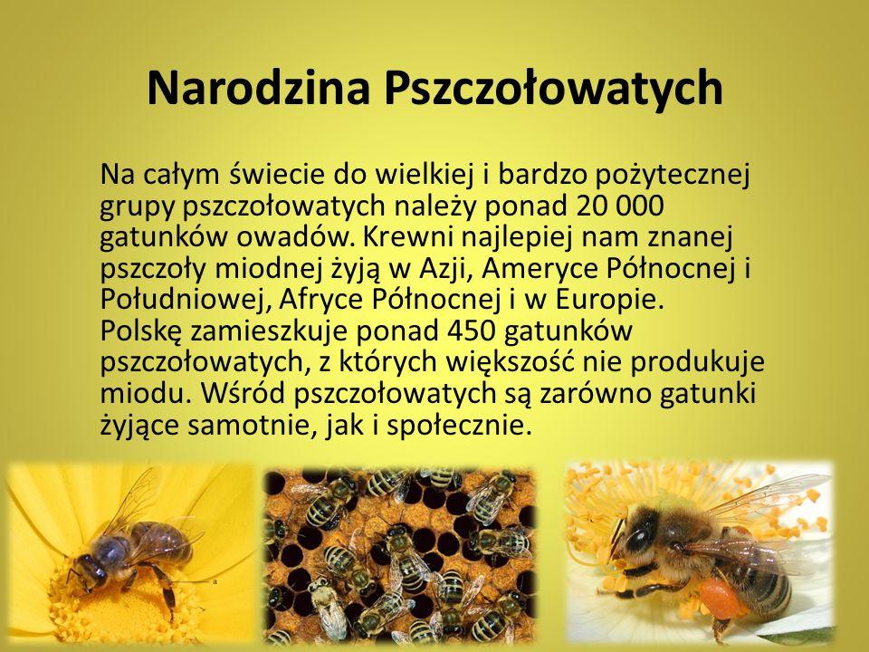 Narodzina Pszczołowatych