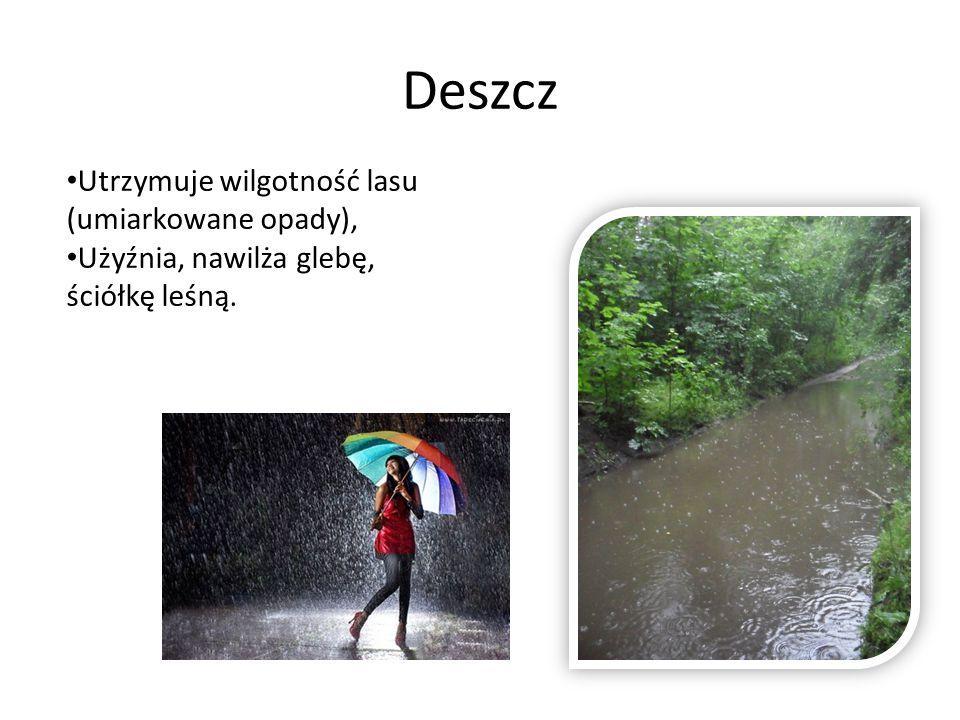 Deszcz Utrzymuje wilgotność lasu (umiarkowane opady),