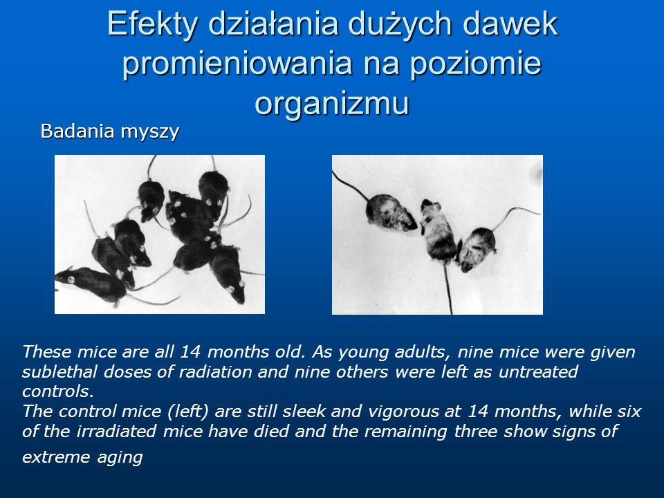 Efekty działania dużych dawek promieniowania na poziomie organizmu