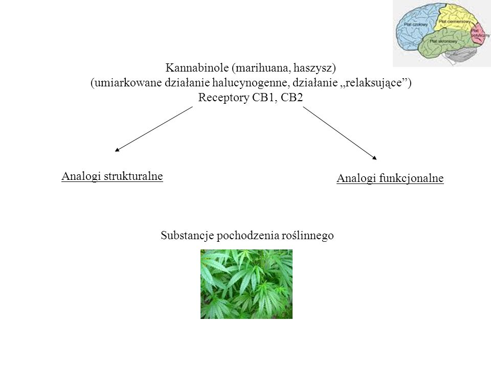 Kannabinole (marihuana, haszysz)