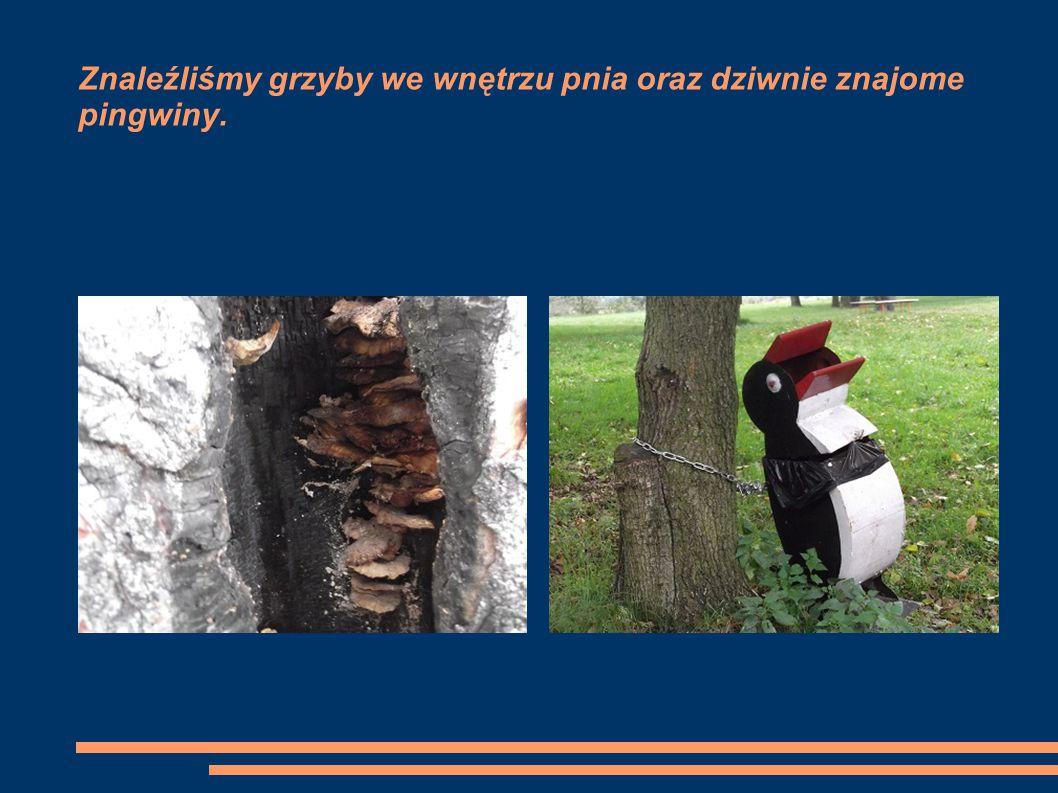 Znaleźliśmy grzyby we wnętrzu pnia oraz dziwnie znajome pingwiny.