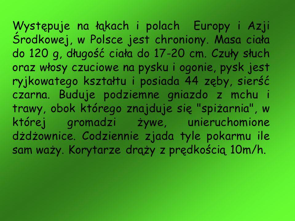 Występuje na łąkach i polach Europy i Azji Środkowej, w Polsce jest chroniony.