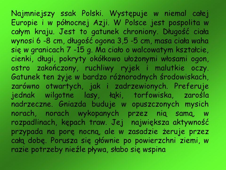 Najmniejszy ssak Polski