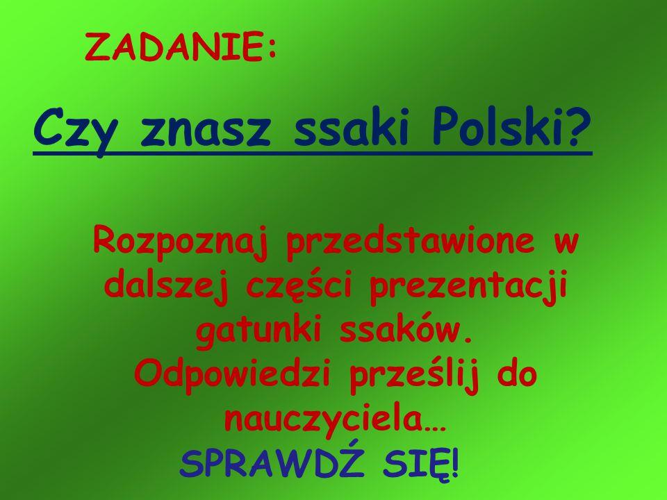 Czy znasz ssaki Polski ZADANIE: