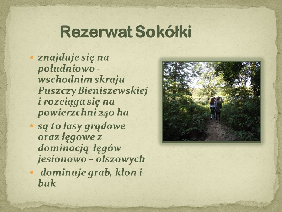 Rezerwat Sokółki znajduje się na południowo - wschodnim skraju Puszczy Bieniszewskiej i rozciąga się na powierzchni 240 ha.