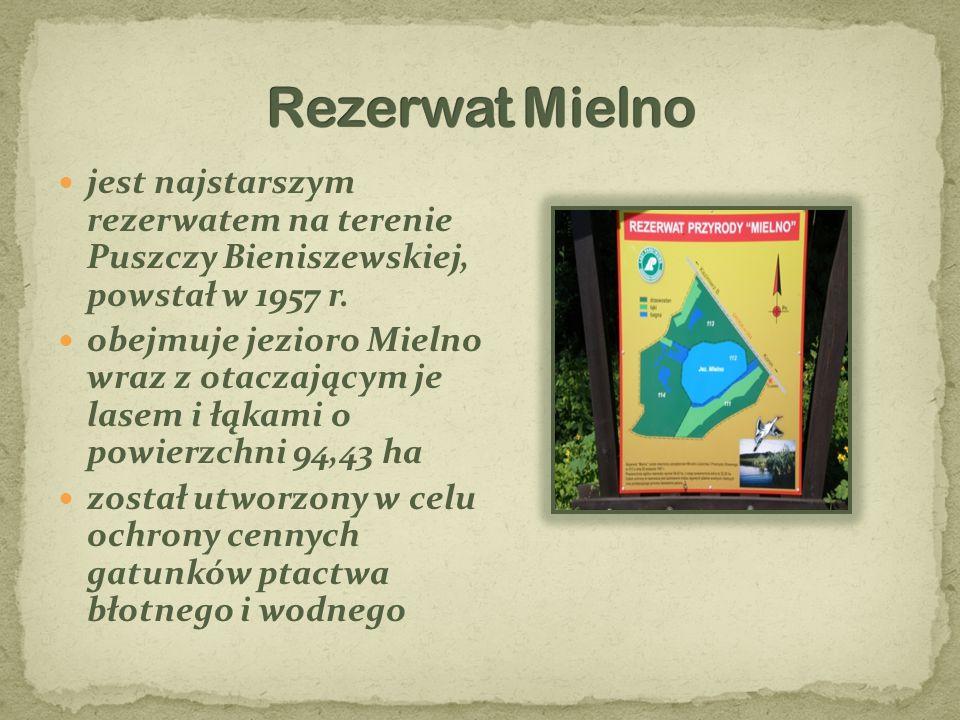 Rezerwat Mielno jest najstarszym rezerwatem na terenie Puszczy Bieniszewskiej, powstał w 1957 r.