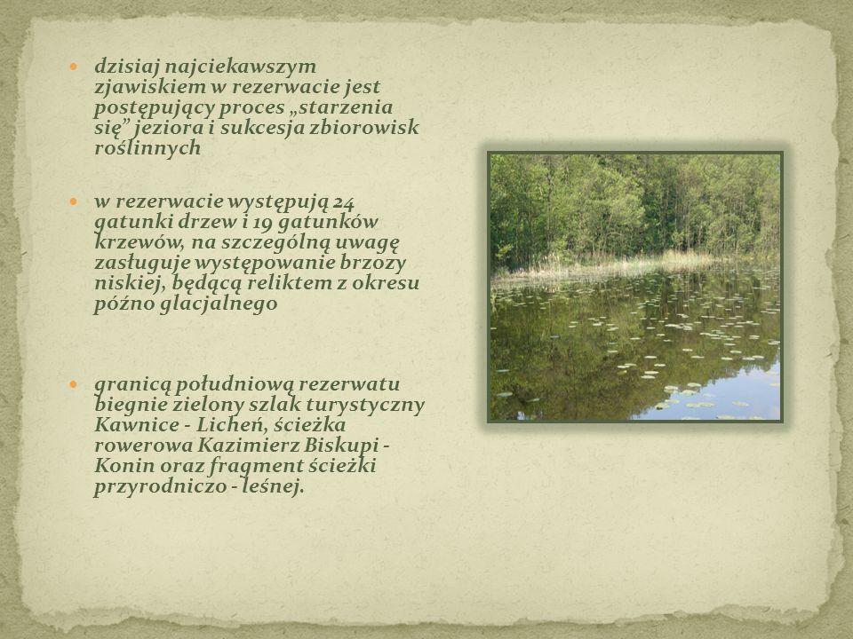 """dzisiaj najciekawszym zjawiskiem w rezerwacie jest postępujący proces """"starzenia się jeziora i sukcesja zbiorowisk roślinnych"""