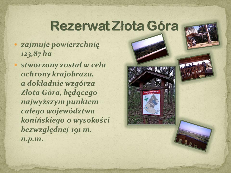 Rezerwat Złota Góra zajmuje powierzchnię 123,87 ha