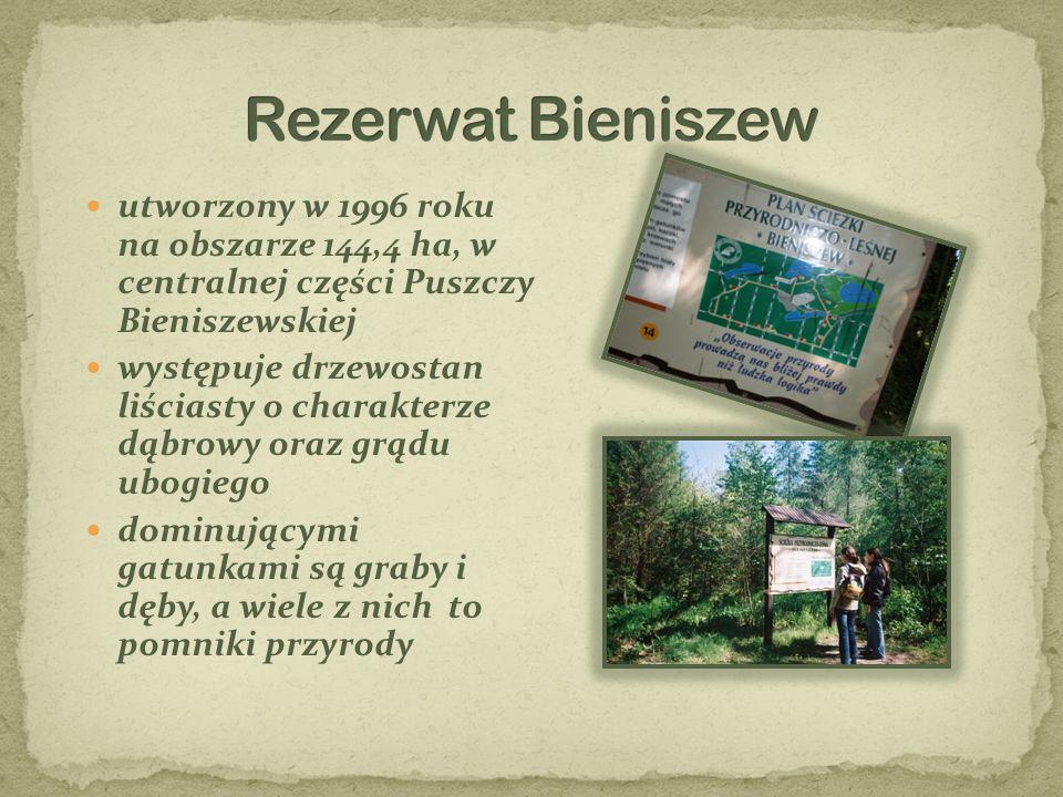 Rezerwat Bieniszew utworzony w 1996 roku na obszarze 144,4 ha, w centralnej części Puszczy Bieniszewskiej.