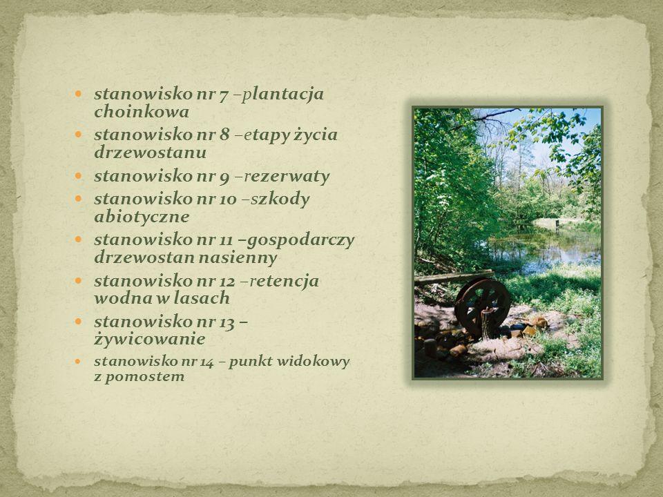 stanowisko nr 7 –plantacja choinkowa