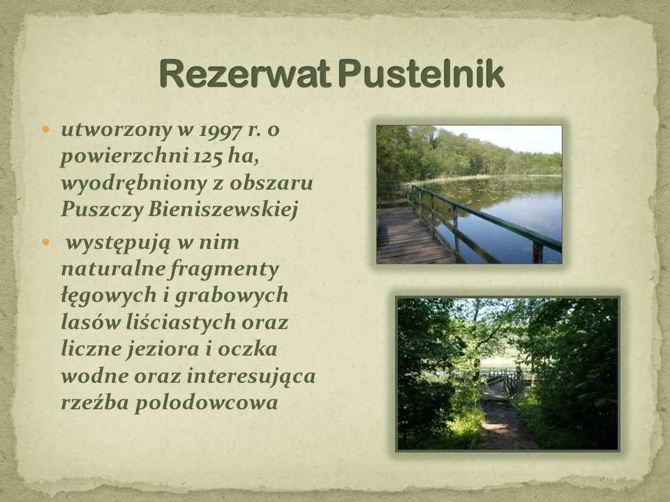 Rezerwat Pustelnik utworzony w 1997 r. o powierzchni 125 ha, wyodrębniony z obszaru Puszczy Bieniszewskiej.
