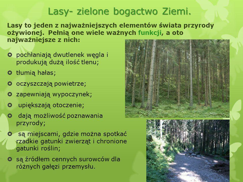 Lasy- zielone bogactwo Ziemi.