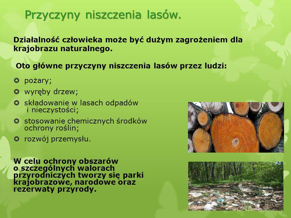 Przyczyny niszczenia lasów.