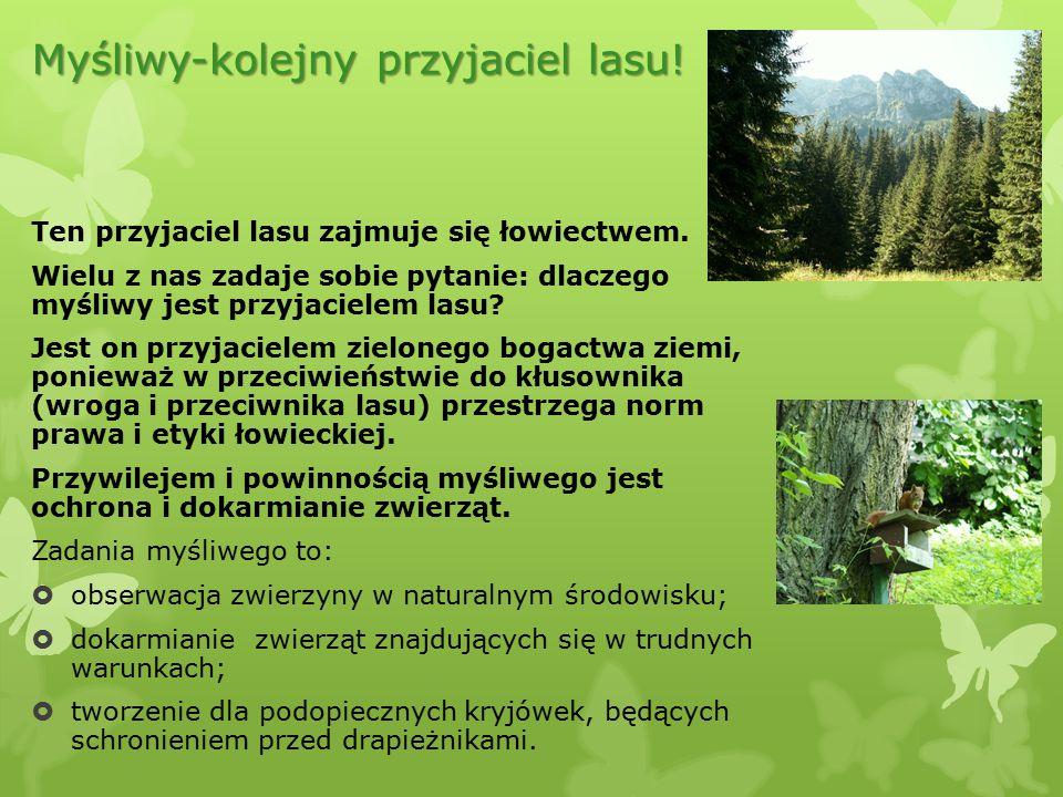 Myśliwy-kolejny przyjaciel lasu!