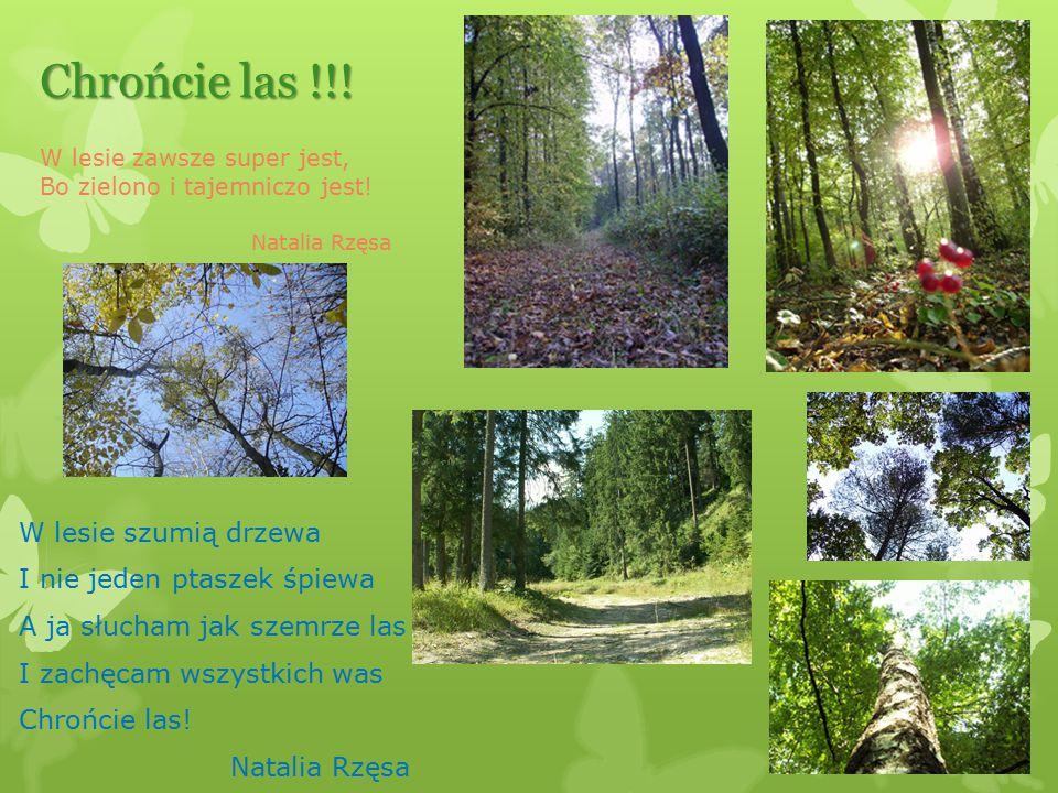 Chrońcie las !!! W lesie zawsze super jest, Bo zielono i tajemniczo jest! Natalia Rzęsa.