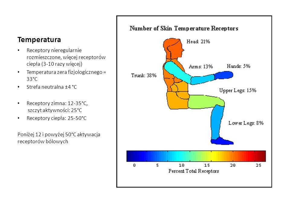 Temperatura Receptory nieregularnie rozmieszczone, więcej receptorów ciepła (3-10 razy więcej) Temperatura zera fizjologicznego = 33°C.