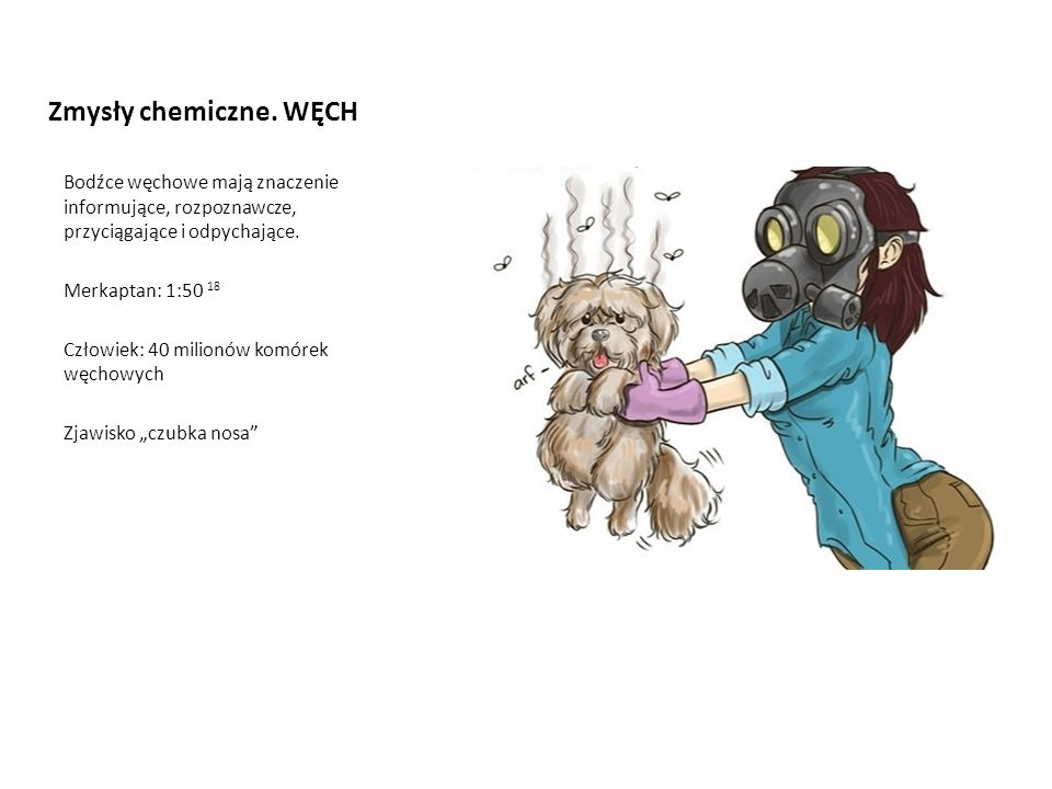 Zmysły chemiczne. WĘCH Bodźce węchowe mają znaczenie informujące, rozpoznawcze, przyciągające i odpychające.