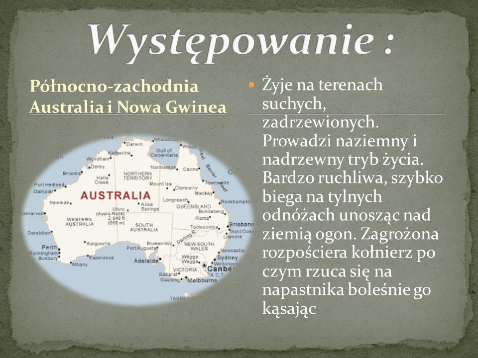 Występowanie : Północno-zachodnia Australia i Nowa Gwinea