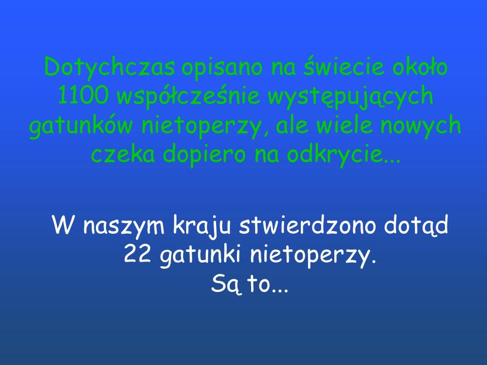 W naszym kraju stwierdzono dotąd 22 gatunki nietoperzy. Są to...