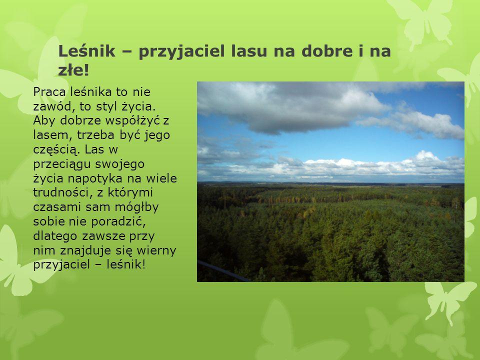 Leśnik – przyjaciel lasu na dobre i na złe!