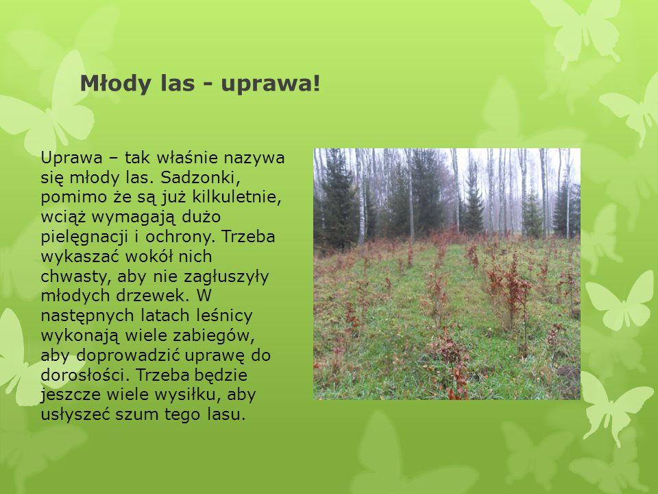 Młody las - uprawa!