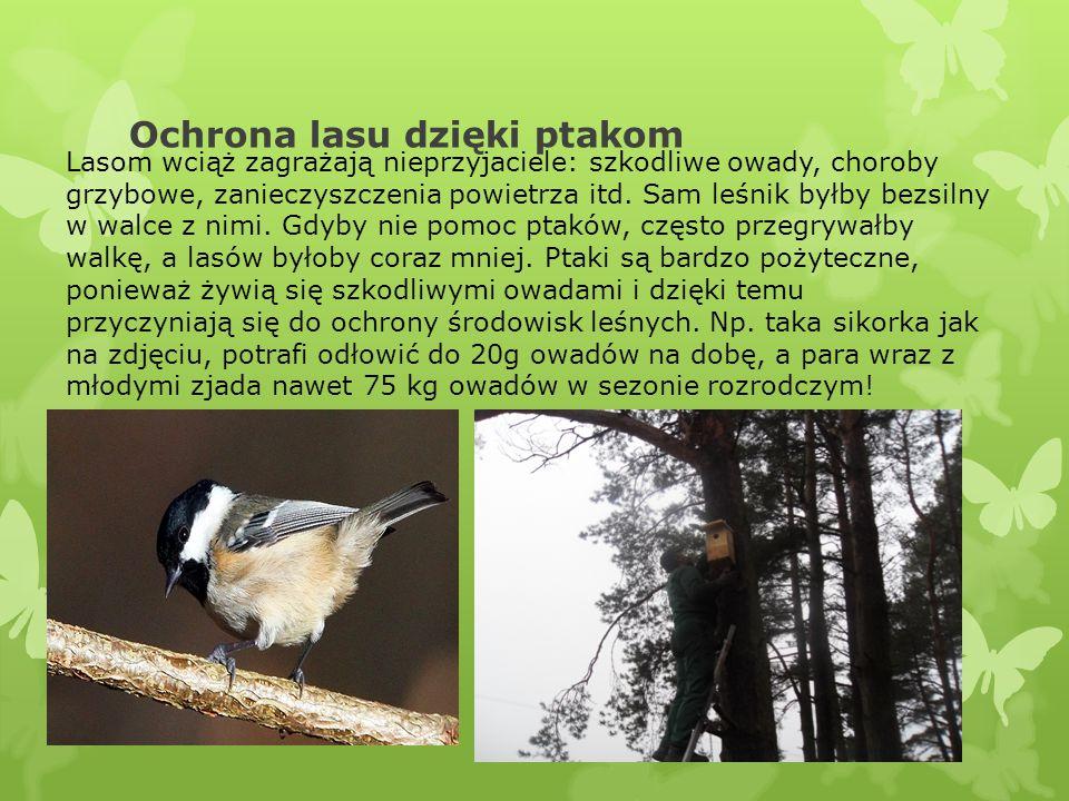 Ochrona lasu dzięki ptakom