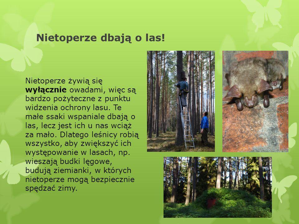 Nietoperze dbają o las!
