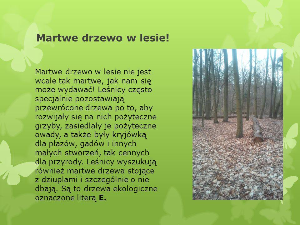 Martwe drzewo w lesie!