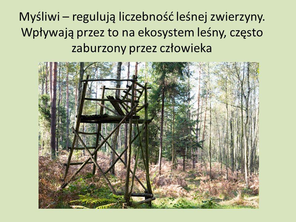 Myśliwi – regulują liczebność leśnej zwierzyny
