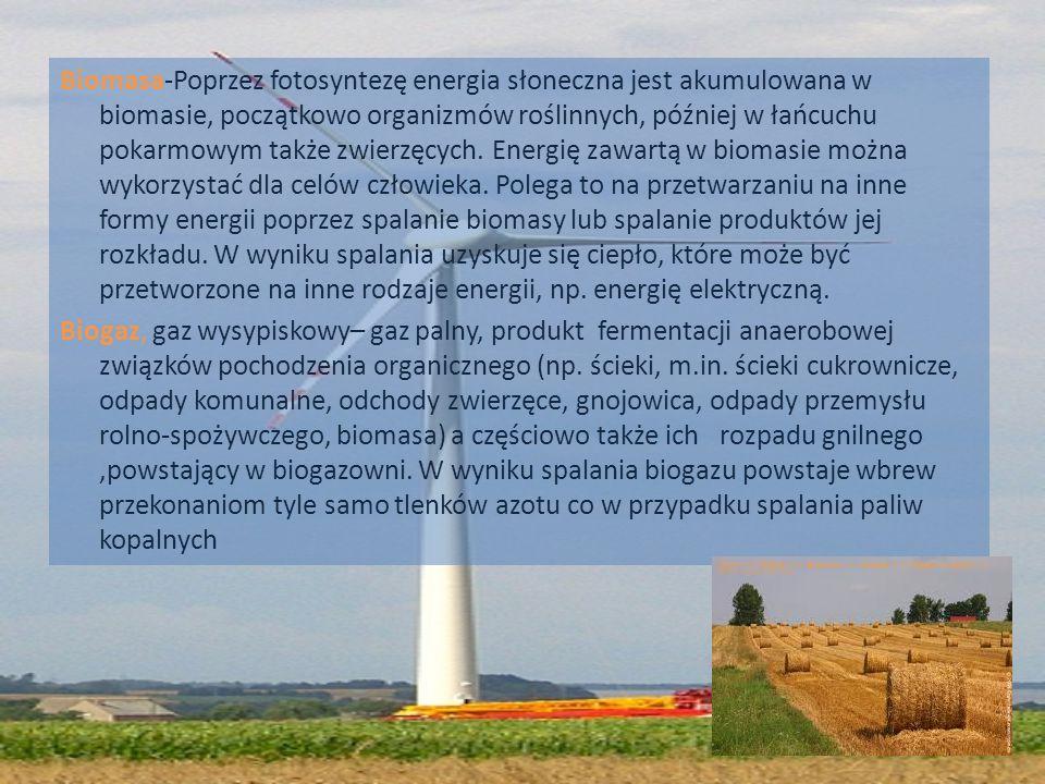 Biomasa-Poprzez fotosyntezę energia słoneczna jest akumulowana w biomasie, początkowo organizmów roślinnych, później w łańcuchu pokarmowym także zwierzęcych.