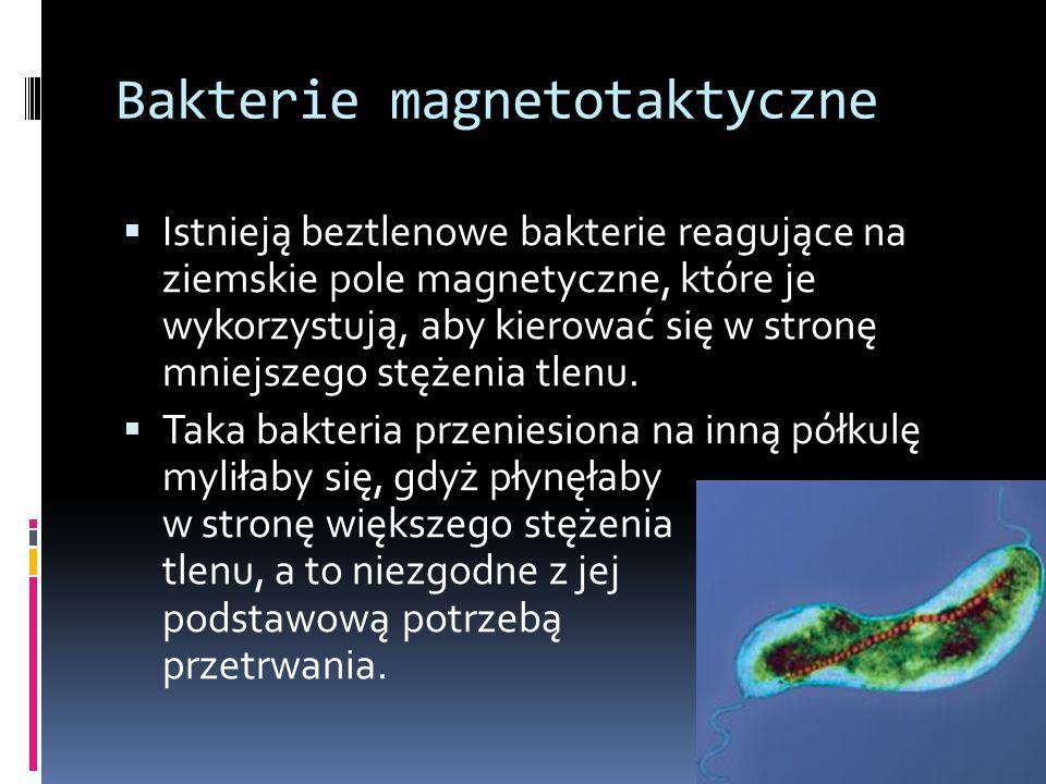 Bakterie magnetotaktyczne