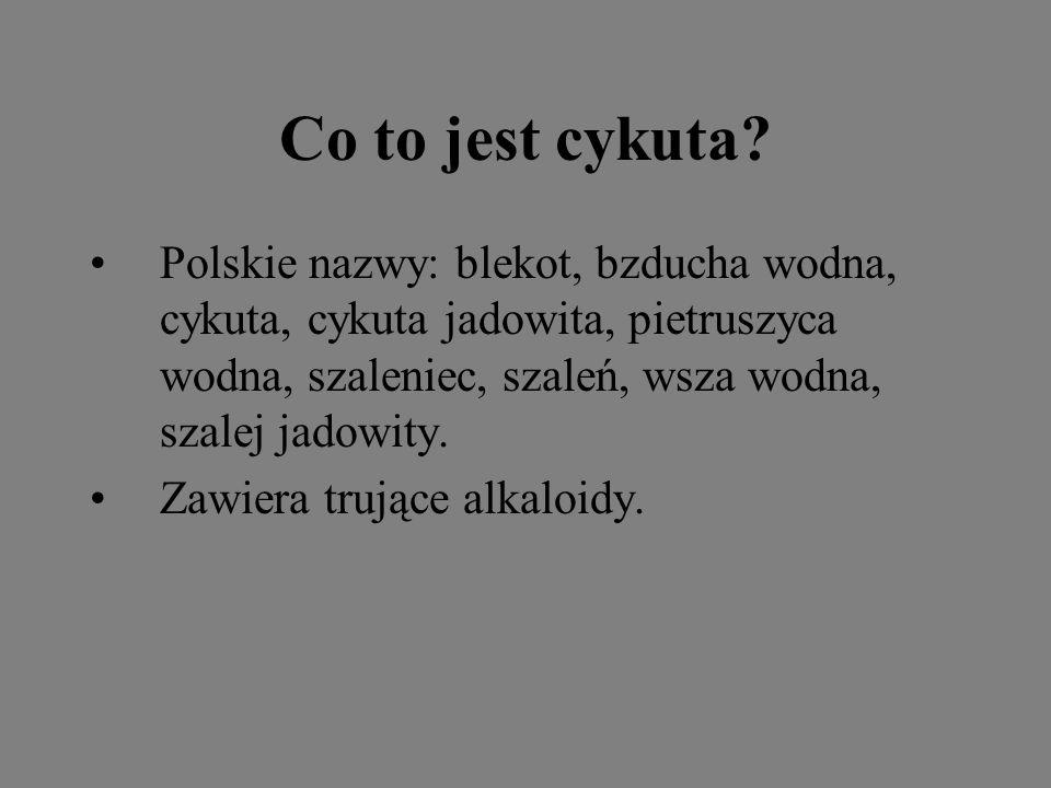 Co to jest cykuta Polskie nazwy: blekot, bzducha wodna, cykuta, cykuta jadowita, pietruszyca wodna, szaleniec, szaleń, wsza wodna, szalej jadowity.