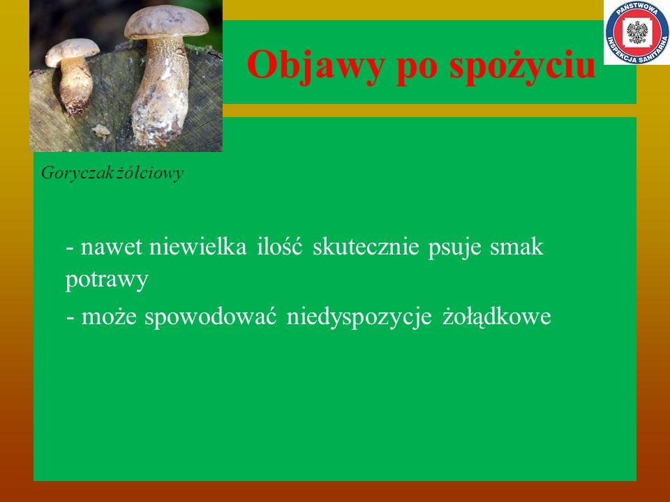 Objawy po spożyciu Goryczak żółciowy. - nawet niewielka ilość skutecznie psuje smak potrawy.